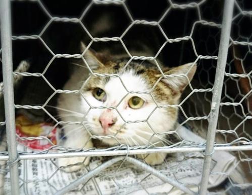 ドラックストアの猫たち☆状況_d0355333_16422280.jpg