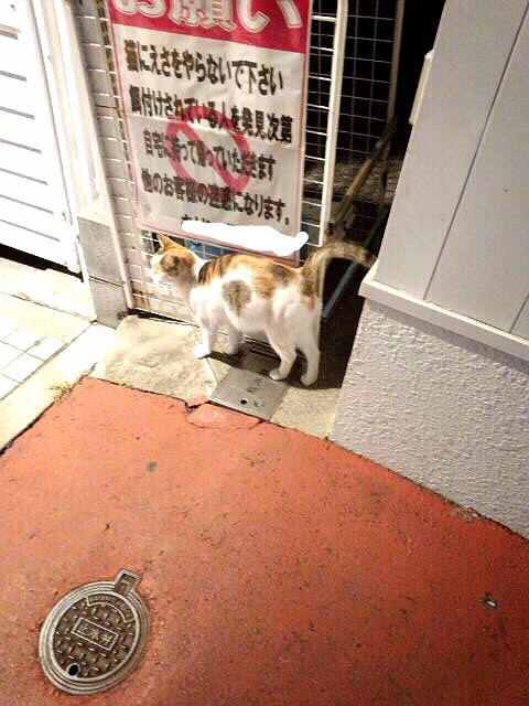 ドラッグストアの猫たち、その後。_d0355333_16425218.jpg