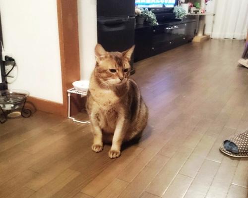 ドラッグストアの猫たち、その後。_d0355333_16425219.jpg