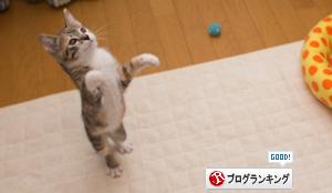 ブロワーとたたかう子猫_d0355333_16425586.jpg