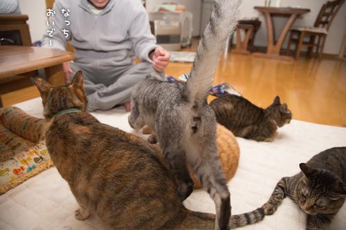 猫密度UP_d0355333_16550422.jpg