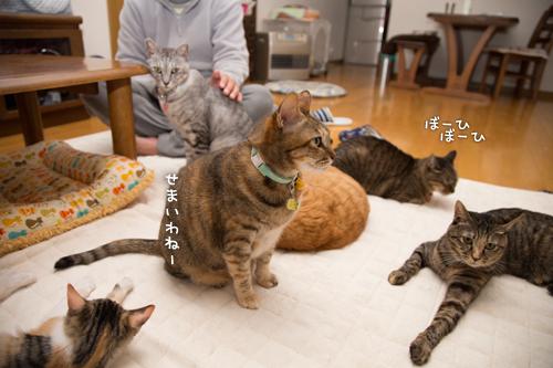 猫密度UP_d0355333_16550477.jpg