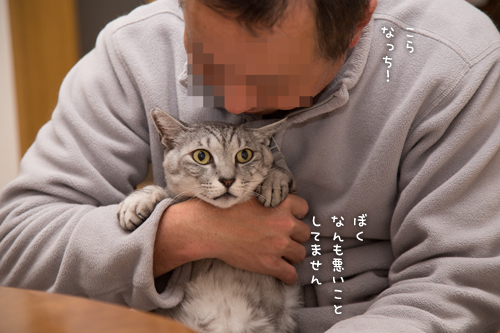 猫密度UP_d0355333_16550515.jpg