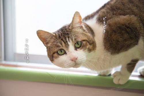 ドラッグストアの猫たち☆近況5_d0355333_16552919.jpg
