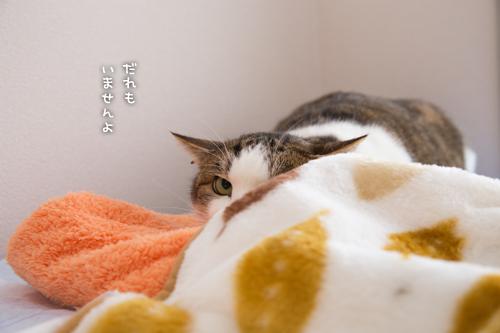 ドラッグストアの猫たち☆近況5_d0355333_16552952.jpg