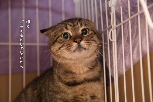 ドラッグストアの猫たち☆近況5_d0355333_16553010.jpg