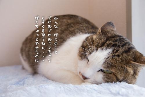 ドラッグストアの猫たち☆近況5_d0355333_16553024.jpg