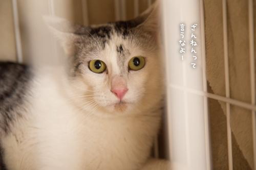 ドラッグストアの猫たち☆近況5_d0355333_16553053.jpg