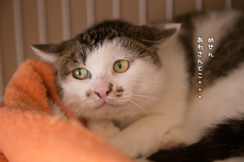ドラッグストアの猫たち☆近況5_d0355333_16553115.jpg
