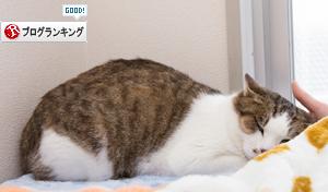ドラッグストアの猫たち☆近況5_d0355333_16553151.jpg