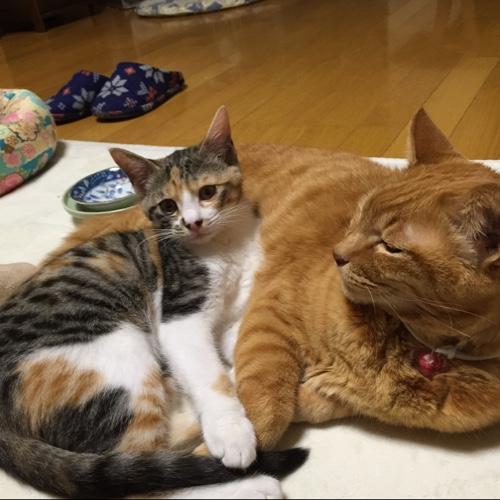 ドラッグストアの猫たち☆近況5_d0355333_16553167.jpg