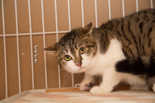 ドラッグストアの猫たち☆近況5_d0355333_16553177.jpg