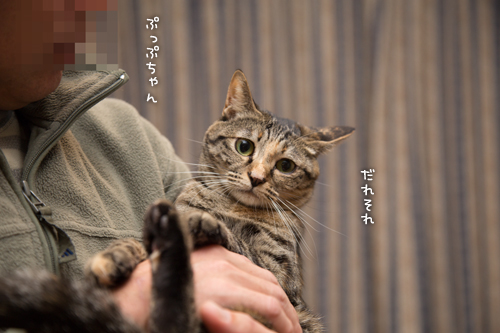 ぷっぷちゃん_d0355333_16560606.jpg