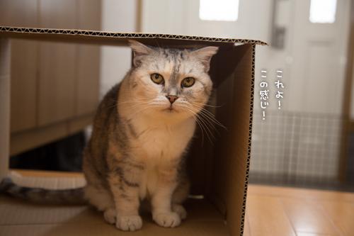 猫のツボ_d0355333_17003985.jpg