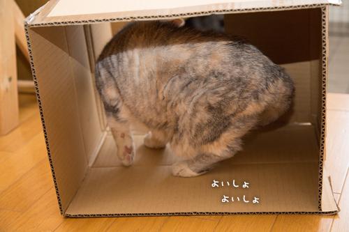 猫のツボ_d0355333_17004002.jpg