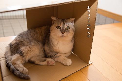 猫のツボ_d0355333_17004073.jpg