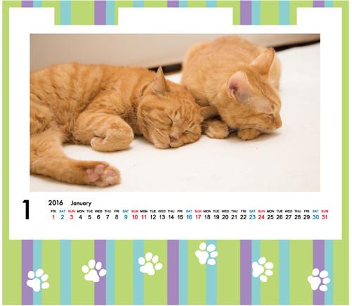 にゃんず日記カレンダー予約開始_d0355333_17013040.jpg