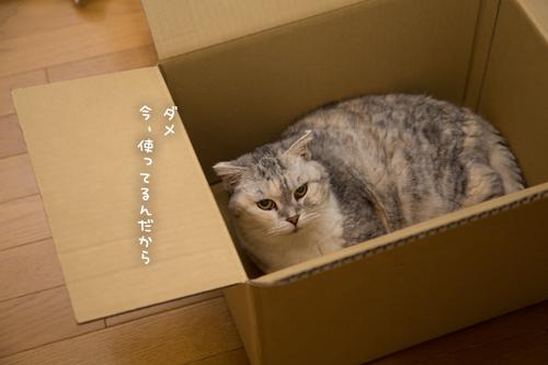 箱が気になるのはアナタだけ_d0355333_17251140.jpg