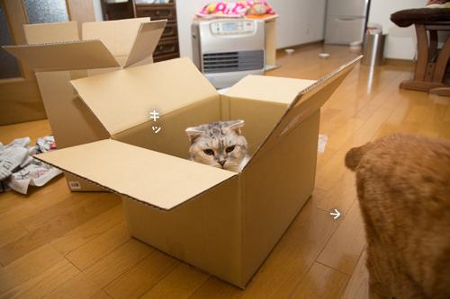 箱が気になるのはアナタだけ_d0355333_17251162.jpg
