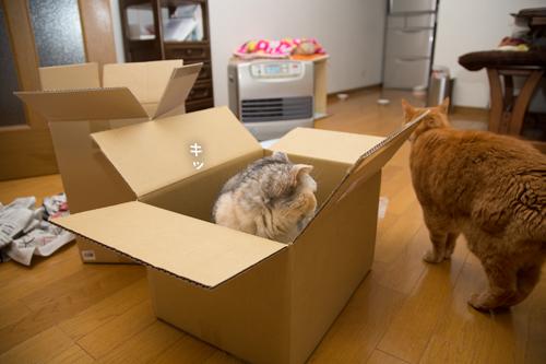 箱が気になるのはアナタだけ_d0355333_17251188.jpg