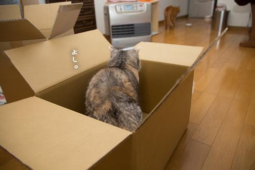 箱が気になるのはアナタだけ_d0355333_17251205.jpg