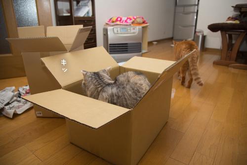 箱が気になるのはアナタだけ_d0355333_17251237.jpg