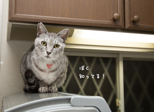 猫草探検隊_d0355333_17254154.jpg