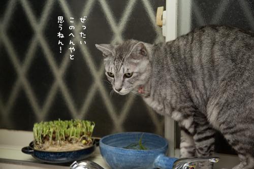 猫草探検隊_d0355333_17254177.jpg
