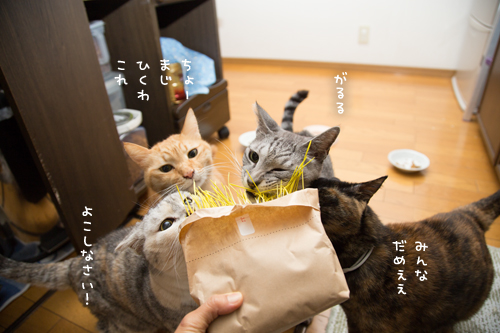 猫草探検隊_d0355333_17254235.jpg