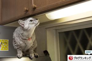 猫草探検隊_d0355333_17254298.jpg