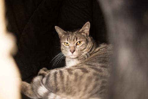 シェルター型猫カフェ「くすめっと」_d0355333_17261197.jpg