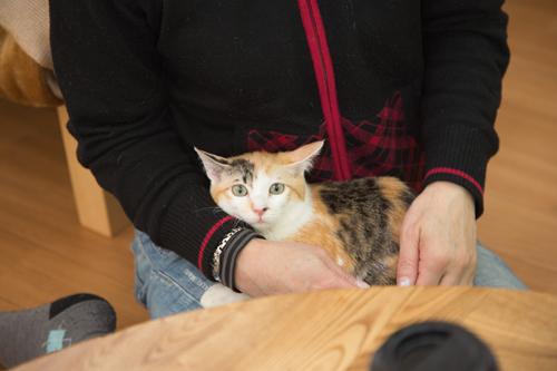 シェルター型猫カフェ「くすめっと」_d0355333_17261201.jpg