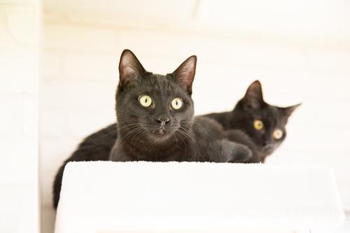 シェルター型猫カフェ「くすめっと」_d0355333_17261214.jpg
