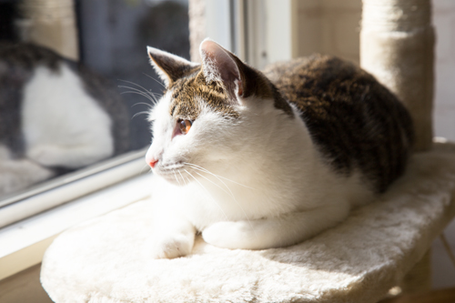 シェルター型猫カフェ「くすめっと」_d0355333_17261312.jpg