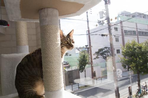 シェルター型猫カフェ「くすめっと」_d0355333_17261380.jpg