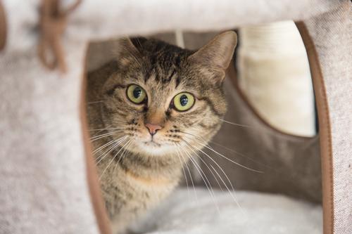 シェルター型猫カフェ「くすめっと」_d0355333_17261423.jpg