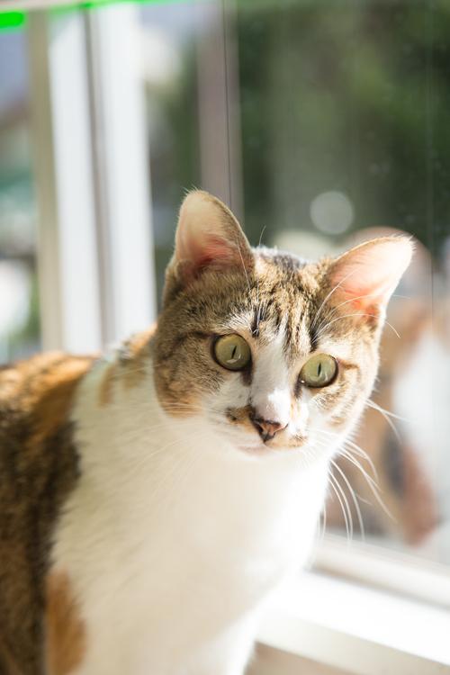 シェルター型猫カフェ「くすめっと」_d0355333_17261430.jpg