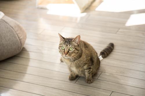 シェルター型猫カフェ「くすめっと」_d0355333_17261433.jpg