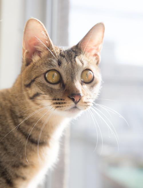 シェルター型猫カフェ「くすめっと」_d0355333_17261450.jpg