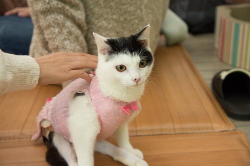 シェルター型猫カフェ「くすめっと」_d0355333_17261471.jpg