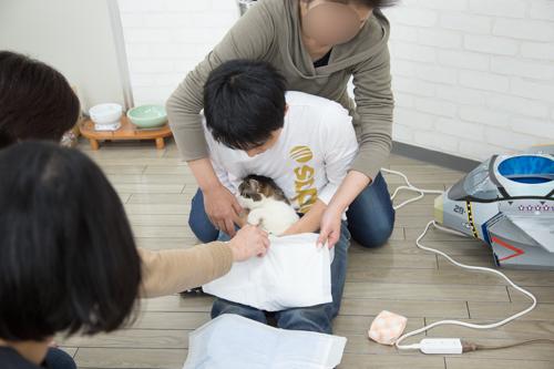 シェルター型猫カフェ「くすめっと」_d0355333_17261541.jpg