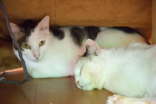 シェルター型猫カフェ「くすめっと」_d0355333_17261543.jpg