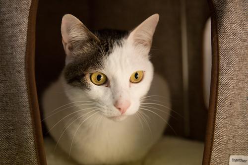 シェルター型猫カフェ「くすめっと」_d0355333_17261555.jpg
