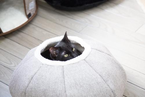 シェルター型猫カフェ「くすめっと」_d0355333_17261559.jpg