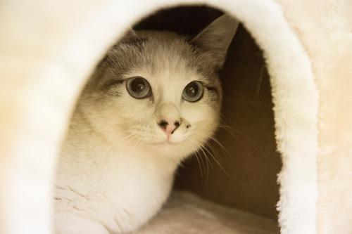 シェルター型猫カフェ「くすめっと」_d0355333_17261597.jpg