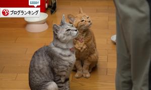 お魚祭り☆その2_d0355333_17271210.jpg