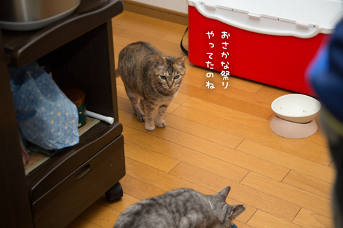 お魚祭り☆その2_d0355333_17271398.jpg