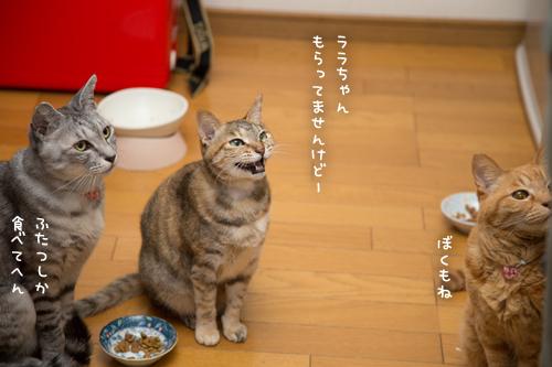 お魚祭り☆その3_d0355333_17271462.jpg