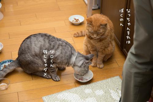 お魚祭り☆その3_d0355333_17271487.jpg