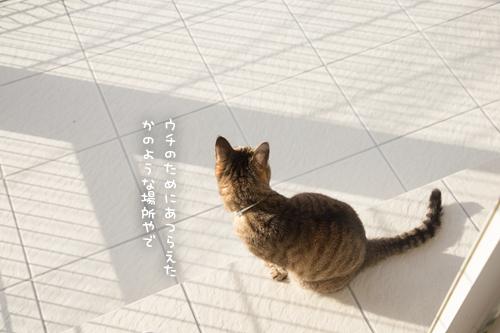 我が家の猫テラスの全貌_d0355333_17272740.jpg